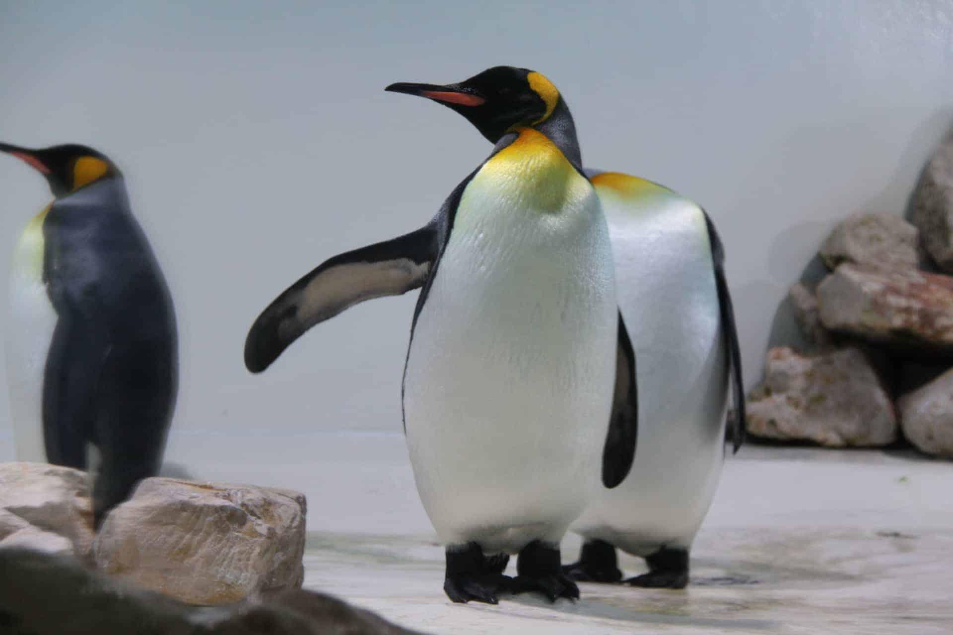München_Tierpark_Hellabrunn_Pinguin