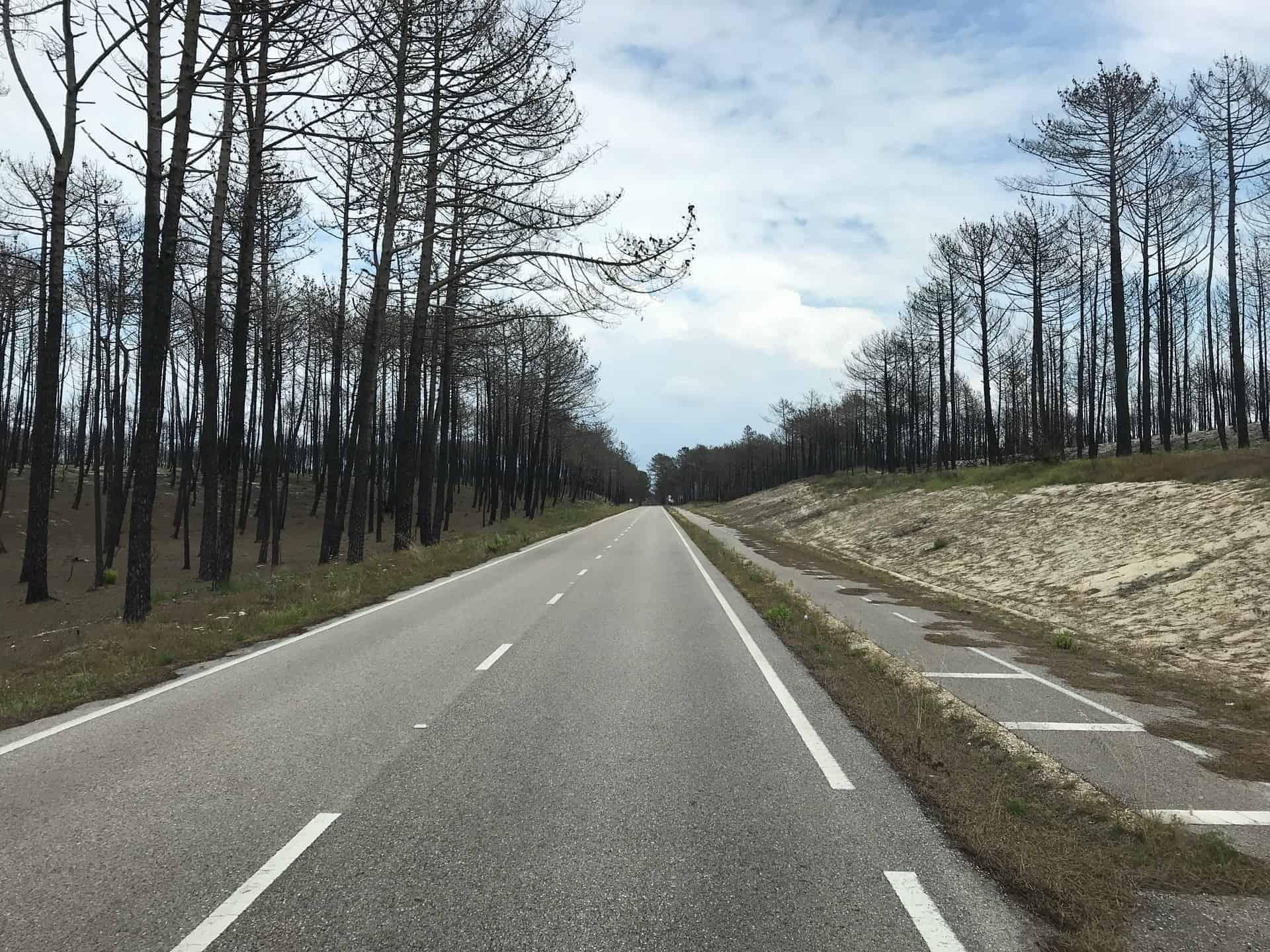 Portugal_Leiria_Verbrannte_Bäume_Hauptstrasse
