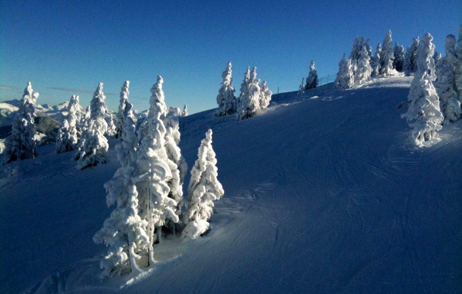 Scheffau Schnee Skipiste Bäume