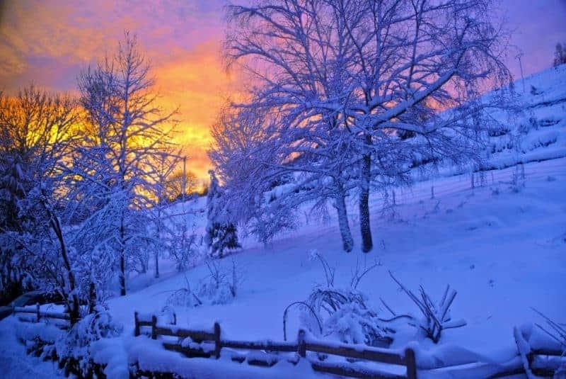 Winter Sonne Schnee und Bäume